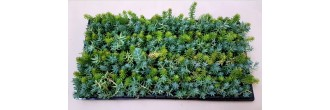 Groundcover Succulents G1 (tray of 128)