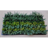 Groundcover Succulents G2 (tray of 128)