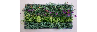 Groundcover Succulents G3 (tray of 128)
