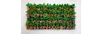 Groundcover Succulents G5 (tray of 128)