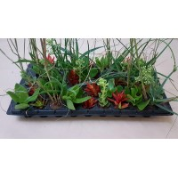 Veld Grass Mix V1 (tray of 45)