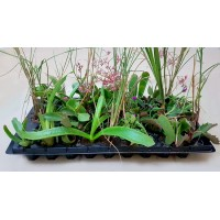 Veld Grass Mix V3 (tray of 45)