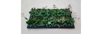 Low-Light Groundcover Mix L1 (tray of 128)