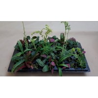 Ready-Mix Assorted Succulents R1 (tray of 45)