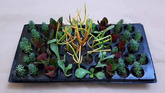 Designer Mix A3 (tray of 45)