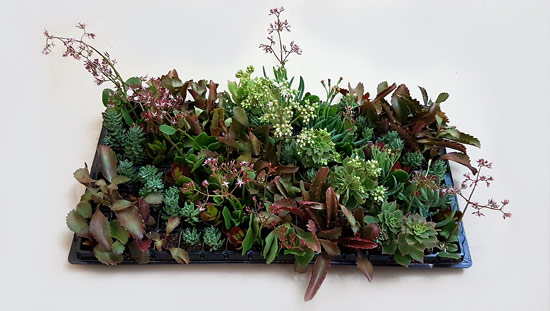Christmas Mix X1 (tray of 128)