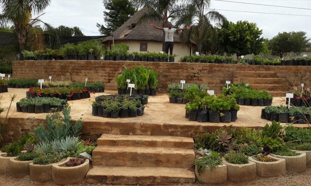 LABYRINTH NURSERY - JO'BURG'S SUCCULENT SPECIALISTS! Our address is as follows: Labyrinth Nursery - Jo'burg's Succulent Specialists, Corner Aureole Ave & Boundary Rd, North Riding AH, Johannesburg, Gauteng, South Africa.