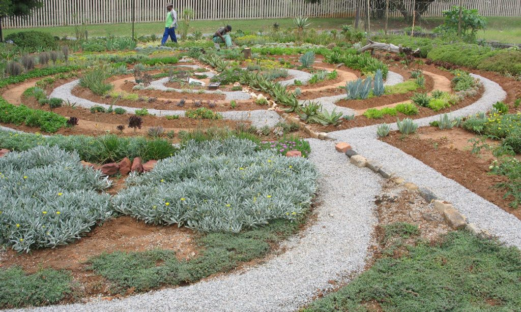 Succulent Trays - waterwise specialists - assorted waterwise plant trays from the succulent specialists (Labyrinth Nursery - JHB's Succulent Specialists) - unique plant combinations!