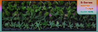 Succulent-Trays.co.za - Assorted waterwise plant trays / drought tolerant / hardy garden plants trays - simple garden designs - groundcover filler trays - small garden designs in a convenient assorted waterwise plant trays!